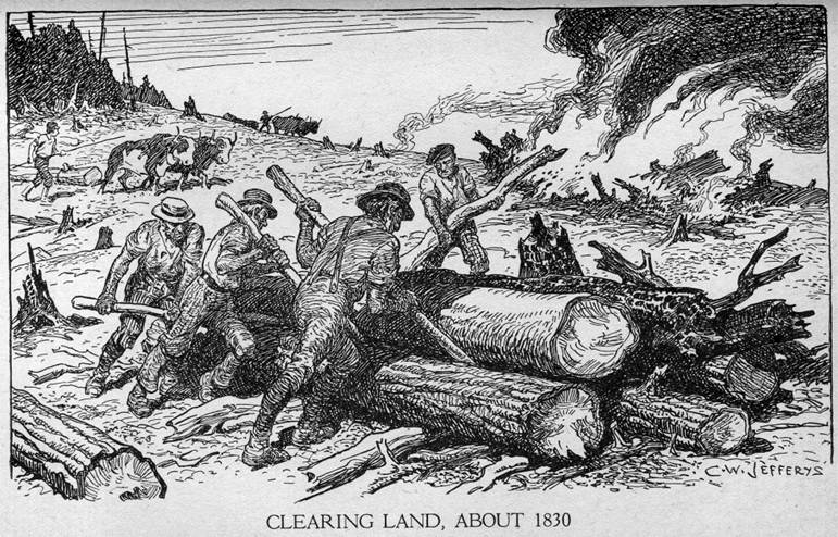 Clearing land picture